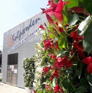 """Partner / Solgarden, Giovini: """"Ci occuperemo delle fornitura delle piante"""""""